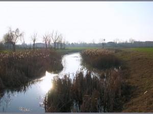 Argini erbosi, aree umide, canne depuratrici, casse di espansione: rinaturalizzazione.