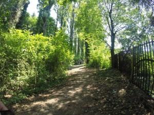 Il sentiero spontaneo è frutto dei camminamenti delle persone che vanno verso il fiume.